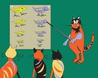 Cat Teacher Royalty Free Stock Image