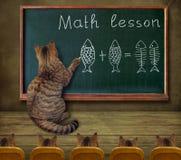 Cat teaches math to students 2 stock photos