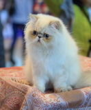 Cat. Tenderness royalty free stock images