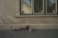 Cat tenderness Stock Image