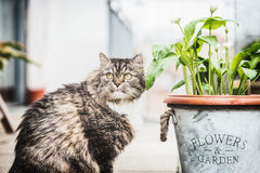 Cat on terrace with flowers pot Royalty Free Stock Photos
