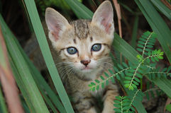 Cat thai Royalty Free Stock Photography