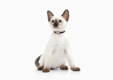 Cat. Thai kitten on white background Royalty Free Stock Images