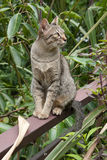 Cat thai. Thailand cats cat that originated in Thailand. Features that make it superior to cats, other cats, Thailand Thailand is a clever cat character. A stock photo