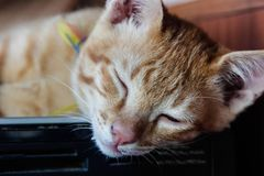 Cat thai, Young cat is sleeping royalty free stock photos