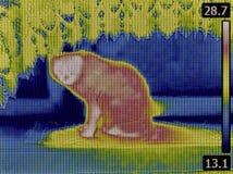 Cat Thermogram Stock Photos