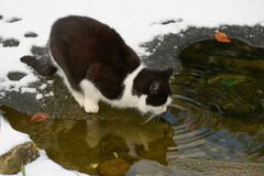 Cat on thin ice Stock Photo