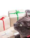 Cat thinking about gifts Stock Images