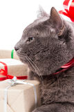 Cat thinking about gifts Royalty Free Stock Photography