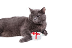 Cat thinking about gifts Royalty Free Stock Photo