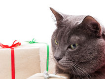 Cat thinking about gifts Stock Photography