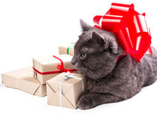 Cat thinking about gifts Royalty Free Stock Image