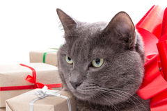 Cat thinking about gifts Royalty Free Stock Photos