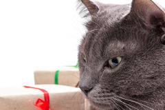 Cat thinking about gifts Stock Photo