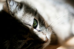 Cat thinking about his future under natural sunlight Royalty Free Stock Photography
