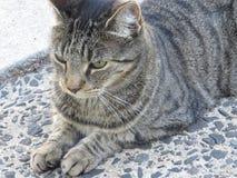 Cat thinking Stock Photos