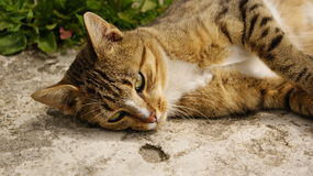Cat thinks about future. Cat lying around on the ground at the hole and thinking about your life Stock Photo