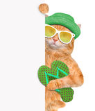 Cat with thongs. Royalty Free Stock Images