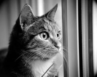 Cat. Thoughtful kitten wistfully looking out the window. He dreams of beautiful sunny weather and the window the rain and wind Stock Photos