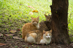 Cat. Three cats are under the tree in park Royalty Free Stock Photos