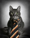 Cat in tie Stock Image
