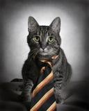 Cat in tie stock image