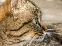 Cat, Tiger, Animal, Domestic Cat Stock Photos