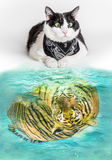 Cat and Tiger stock photos