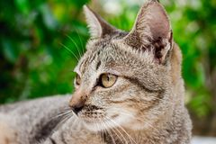 Cat tiger color , lovely, pretty, cute, charming Royalty Free Stock Photos