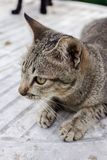 Cat tiger color, lovely, pretty, cute, charming Royalty Free Stock Photos