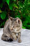 Cat tiger color, lovely, pretty, cute, charming Stock Images