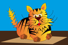 Cat, tiger, tomcat, Stock Photo