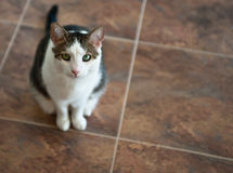 Cat on Tile Floor Stock Images