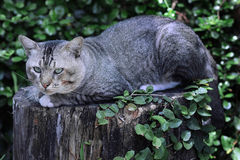 Cat on timber. A tabby cat sleeping on the edge of a  timber Stock Photos
