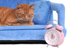 Cat Times Royalty Free Stock Photos