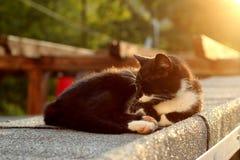 Cat On Tin Roof caldo nel tramonto Fotografia Stock Libera da Diritti