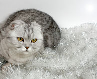 Cat with tinsel Stock Images