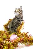 The cat in a tinsel look left. The cat in a golden tinsel look left Royalty Free Stock Photo