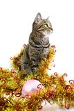 The cat in a tinsel look right. The cat in a golden tinsel look right Stock Photos