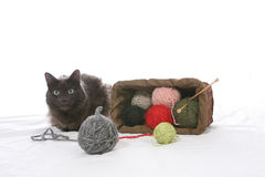 Cat tipped over knitting basket Royalty Free Stock Images