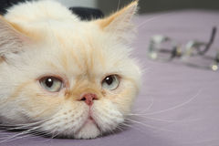 Free Cat Tired Stock Photography - 49403372