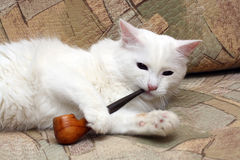 Cat with tobacco-pipe. White cat on sofa with tobacco-pipe royalty free stock image