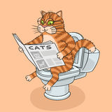 The cat in the toilet. Royalty Free Stock Photography