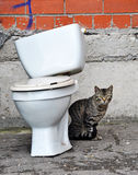 Cat and toilet Stock Photos