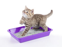 Cat in toilet tray box with litter isolated. On white royalty free stock images