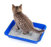 Cat in toilet tray box with litter rear view isolated. On white stock image