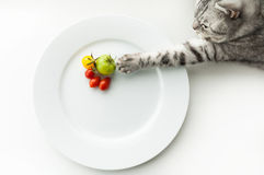 Cat with tomato. Cat steals vegetables from a plate Royalty Free Stock Photo