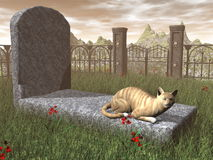 Cat on a tombstone - 3D render Stock Photos