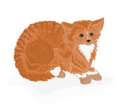 Cat tomcat redheaded. Vector illustration without gradients Stock Photos