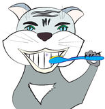 Cat with toothbrush Royalty Free Stock Image